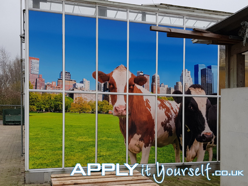 large, wall sticker, multiple windows, outside, outdoor, cow, window stickers, custom design