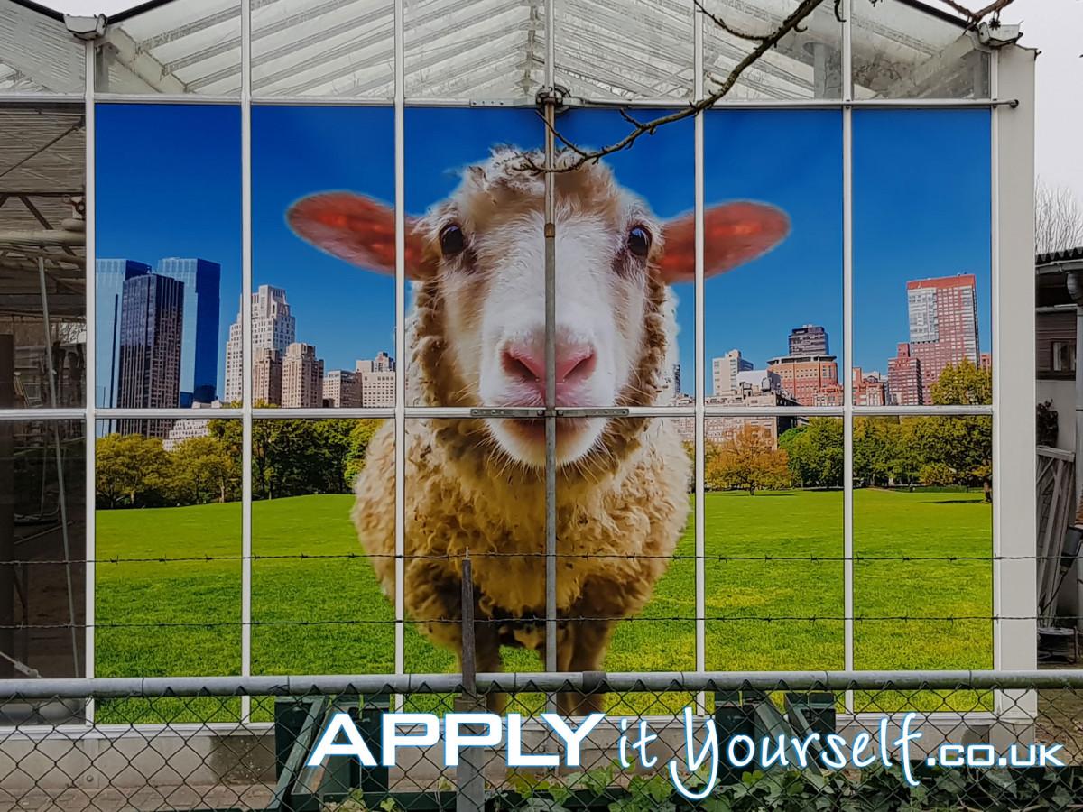 large, wall sticker, multiple windows, outside, outdoor, sheep, window stickers, bespoke design