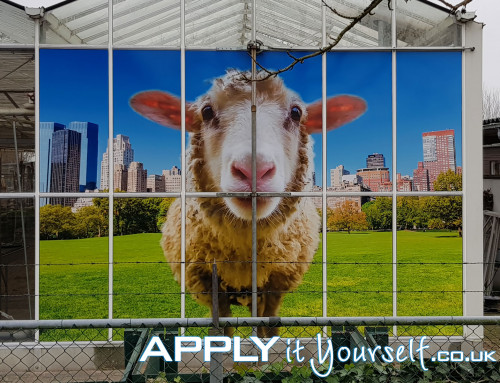 Large, custom window sticker, multiple windows, outside, outdoor, sheep, bespoke design